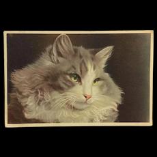 Elegant Green Eyed Cat Postcard