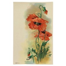 Bright Beautiful Red Poppy Postcard