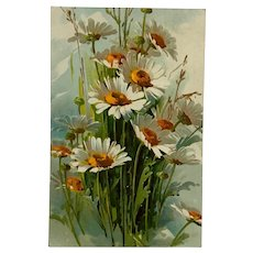 Beautiful Summer Daisy Bouquet