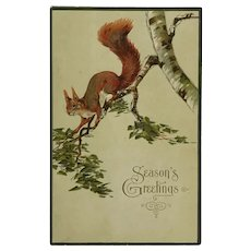 Frisky Red Tailed Squirrel Starts The Holiday Season