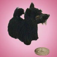 Small Fur ScottyTerrier Dog