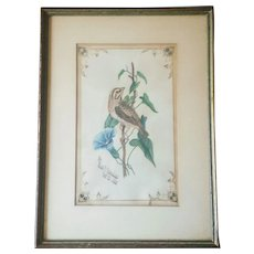 Antique Watercolor Sparrow on Morning Glory Artist Signed and Dated