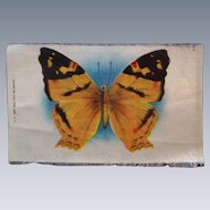 Lovely Large Vintage Tobacco Silk Butterfly Dollhouse Rug