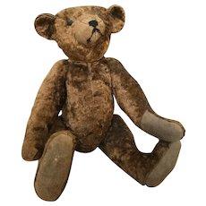 1900 Chocolate Borwn Bear
