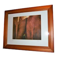Signed and numbered Elephant Photograph by Collins