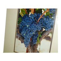 Professional Photo Wine Country Signed