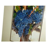 Professional Photo Wine County Signed