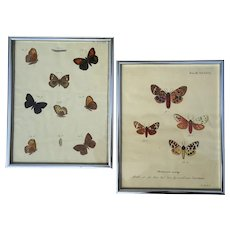 Pair Of 19th Century Framed Hand-Colored Moth Engravings