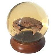 Large Vintage Nature's Gem Calico Crab Sphere On Wooden Base