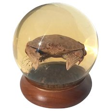 Large Vintage Nature's Gem Calico Crab Sphere On Wooden Base