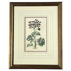 Early 19th Century Framed Hand-Colored Botanical Engraving, Circa 1823