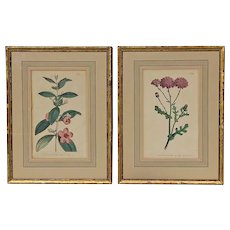Pair Of 18th Century Hand Colored And Gilt Wood Framed Botanical Engravings, Dated 1793 & 1794