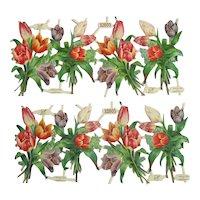 Victorian German Tulip Scraps