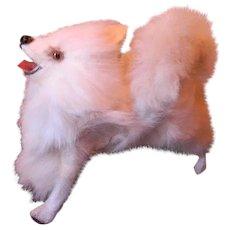 Salon Dog, Spitz Doll Companion, Adorable!