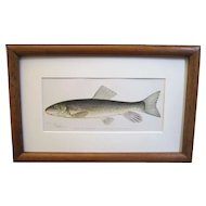 A Pair of Denton Fish Lithographs