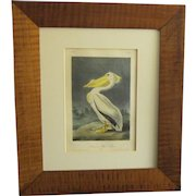 """First Octavo Edition Audubon Hand Colored Lithograph of """"The American White Pelican"""""""