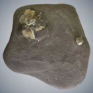Lake Michigan Marcasite and Pyrite in slate