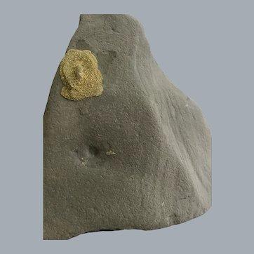 Pyrite Bloom on Slate
