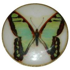 Early Plastics with Enamel Butterfly Brooch West Germany