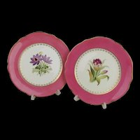 Pair Of Mid 19th Century Coalport Cabinet Botanical Plates