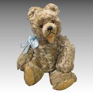 Sweet Stiff Teddy Bear Seeking New Den