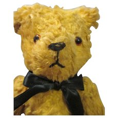 Sweet Golden Teddy Bear Looking For A Home