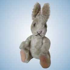 Adorable Steiff Bunny