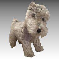 Lovable Steiff Puppy Seeking New Master