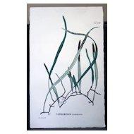 Flora Javae Print- Botanical