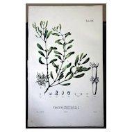 Flora Javae Botanical- XXV