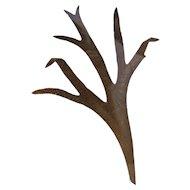 Staghorn Fern Specimen