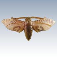 Victorian Butterfly Brooch (Horn Tiger Moth)