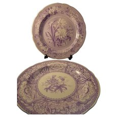 Two Spode Purple Transfer Archive Collection Plates Floral and Botanical