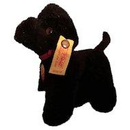 Blacky Steiff Black Poodle Tagged!