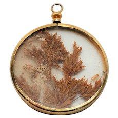 Capsuled Fern pendant
