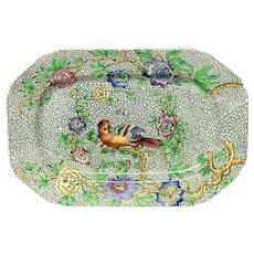 """Exotic and Rare Spode """"Parrot"""" Small Platter"""
