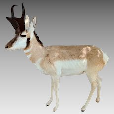 Pronghorn Antelope Full Mount Taxidermy