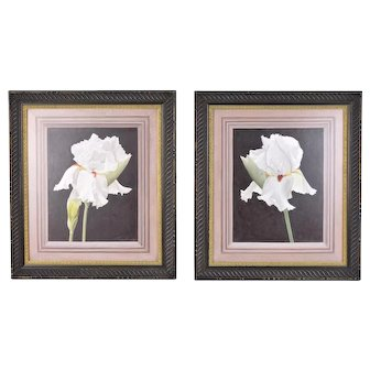 Pair Vintage Photorealist Oil Paintings White Irises w trompe l'oeil frame mat