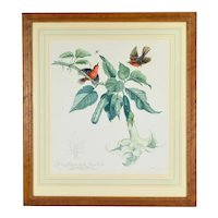 Argentinian Botanical Painting Scarlet Flycatcher Birds Angel's Trumpet Flowers