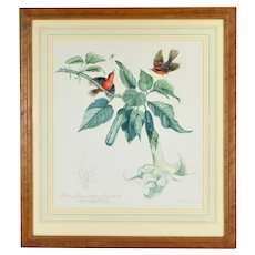 Argentinian Botanical Painting Scarlet Flycatcher Birds Angel's Trumpet Flowers