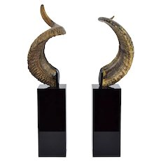 Pair Vintage Ram's Horns Mounted on Black Acrylic or Lucite Pedestals