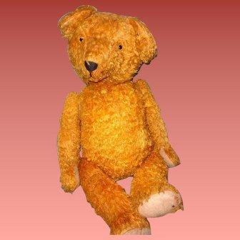 "Large 27"" Golden Mohair German Teddy Bear ~ 1940s Straw Stuffed"