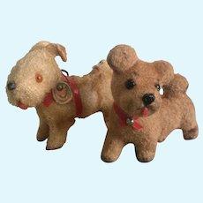 German, Miniature Dogs