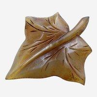 Art Nouveau carved steer horn brooch formed as an ivy leaf