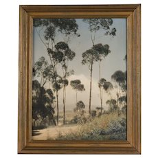 Original Leopold Hugo Arts and Crafts Hand-Tinted Photograph, Eucalyptus Grove, California, circa 1920's
