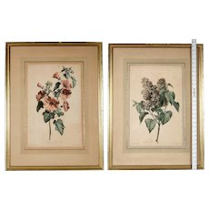 Two Hand-Colored Botanical Engravings, Circa 1800: Gerard van Spaendonck , Louis Charles Ruotte