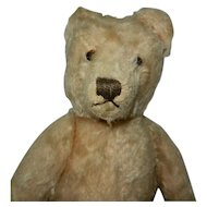 "13"" 1950's Light Gold Steiff Original Teddy Bear"