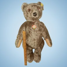 "Fantastic 20"" 1950's  Steiff Caramel Original Teddy Bear"