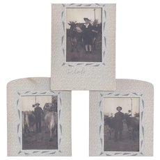 Group of 6 Farm Cow Western Americana Sepia Tone Photographs