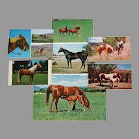 Group of 7 Horse Postcards